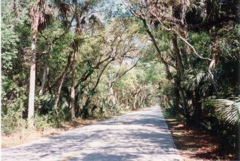 02R. Near Ormond Beach, Florida - A Natural forest, part of Tomoka State Park.
