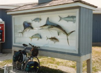 15J. North Carolina - The game fish which bring rich fishermen to the outer Banks.