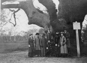 The Major Oak - 1913